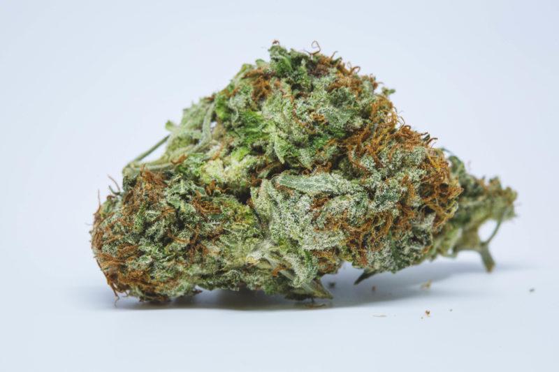 Dallas Buyers Super Kush 5 800x533 Sensi Star Marijuana Strain