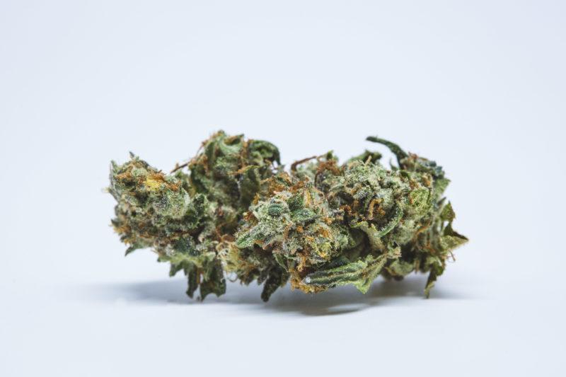 Toronto Dispensary White Russian 10 800x533 White Fire OG Marijuana Strain