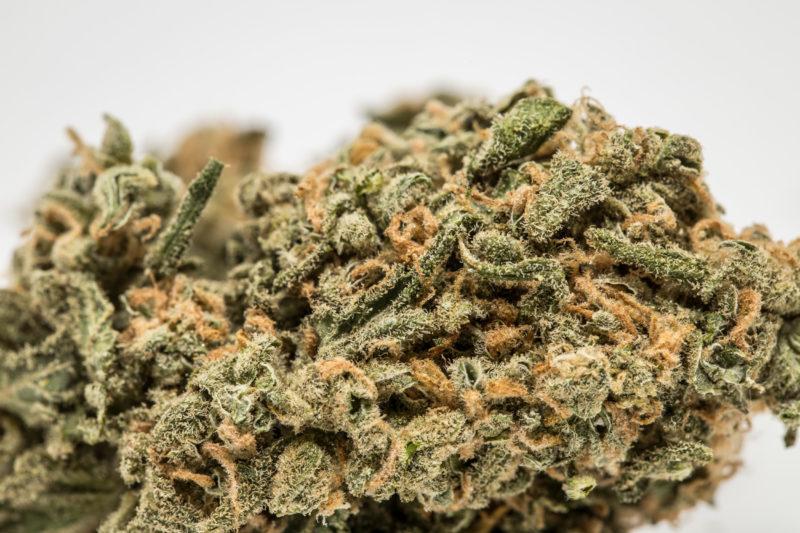 Super Silver Hashplant 800x533 Hash Plant Marijuana Strain