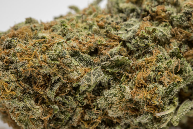 20170815 HERB PeaceandLove 0097 800x533 9 Pound Hammer Marijuana Strain