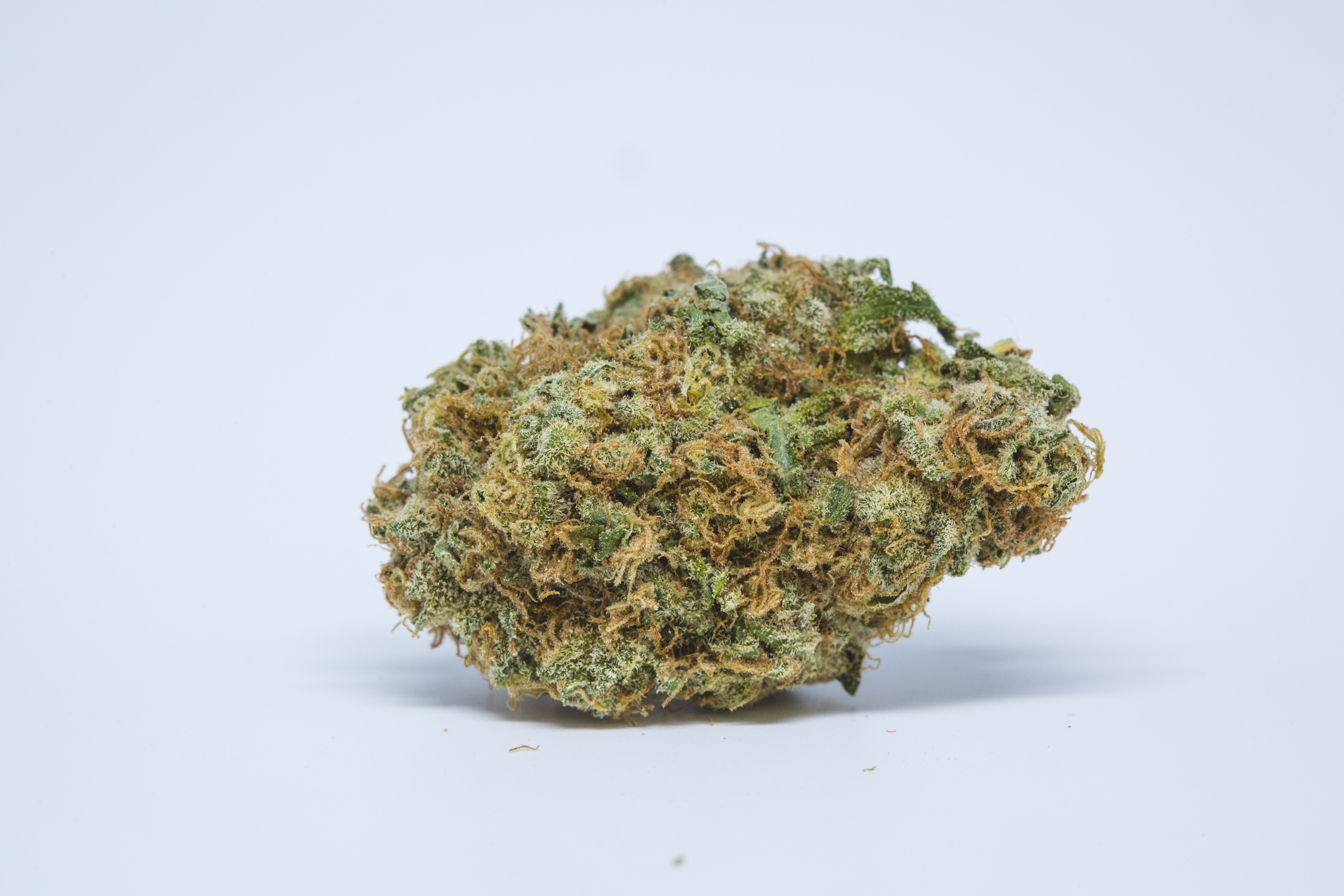 Best Buds Critical OG 7 The Ten Worst Weed Strain Names