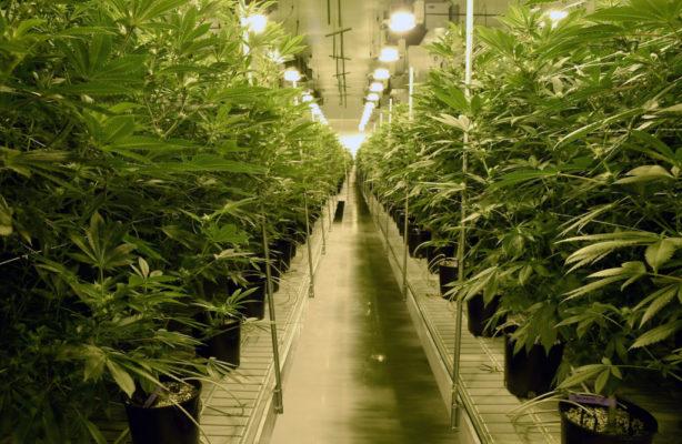 Nevada recreational marijuana