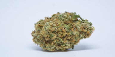 Best Buds Critical OG 7 386x193 We tested the best strains for chronic back pain