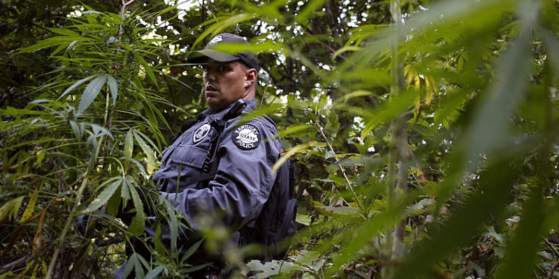 GettyImages 607549388 800x400 5 reasons cops want to legalize recreational marijuana too