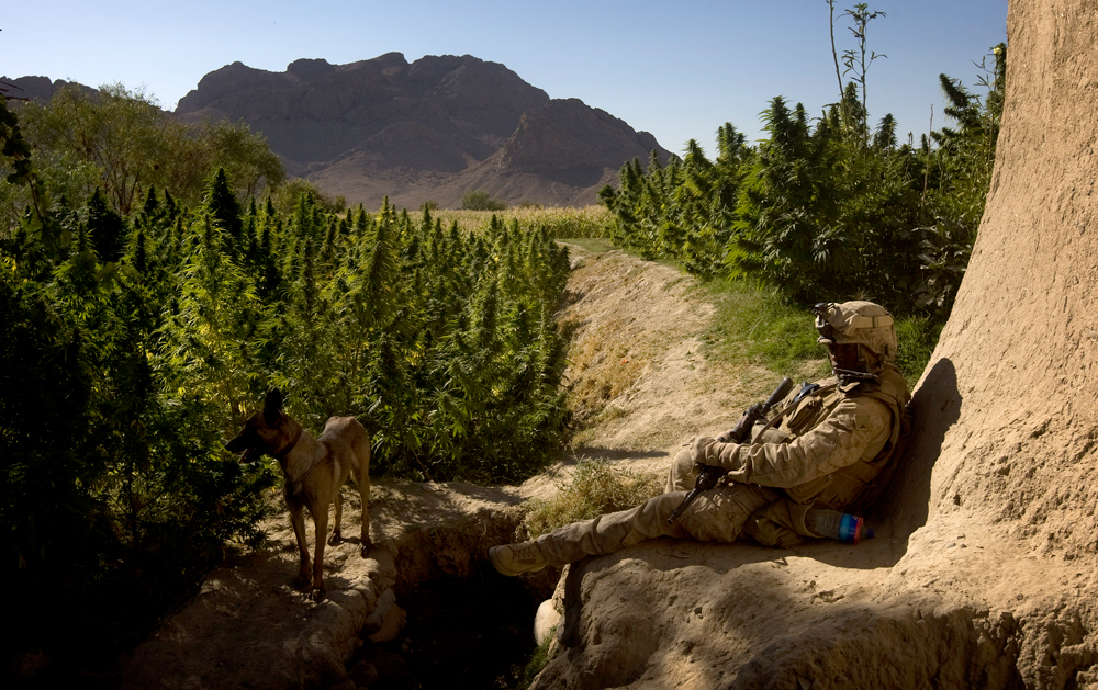 GettyImages 91788497 The US Military is waving cannabis use and letting medical marijuana patients serve