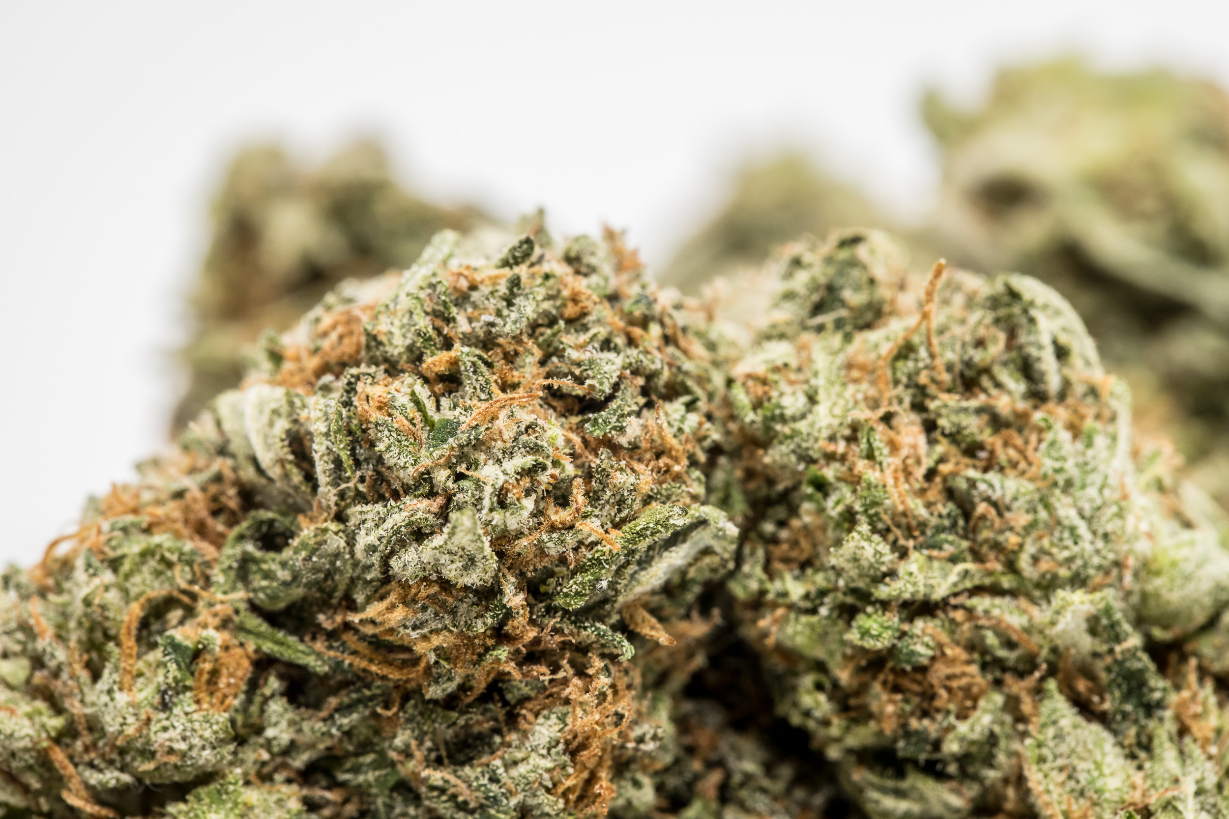 The Hulk We tested the best strains for chronic back pain